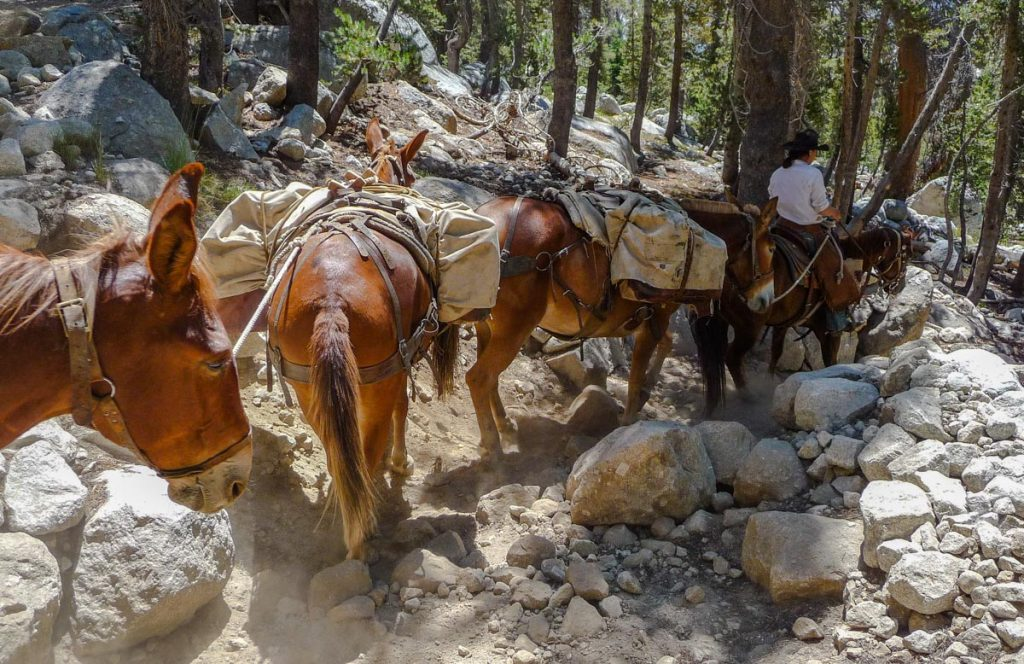 Pack horse train, Yosemite National Park