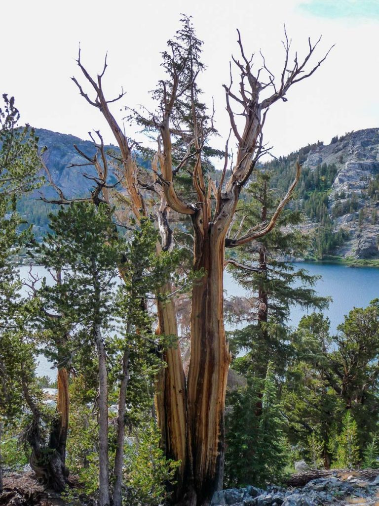 Tree by Garnet Lake