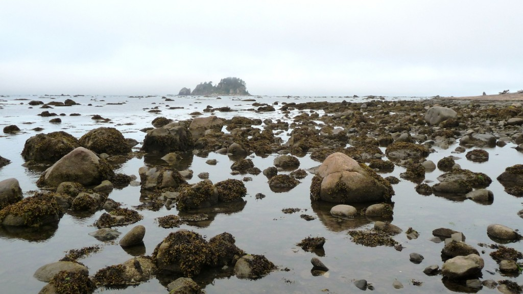 Ozette Island in the background