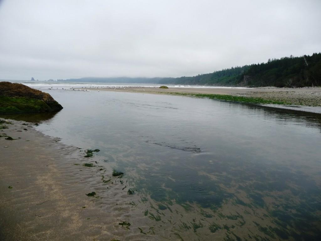 Ozette River