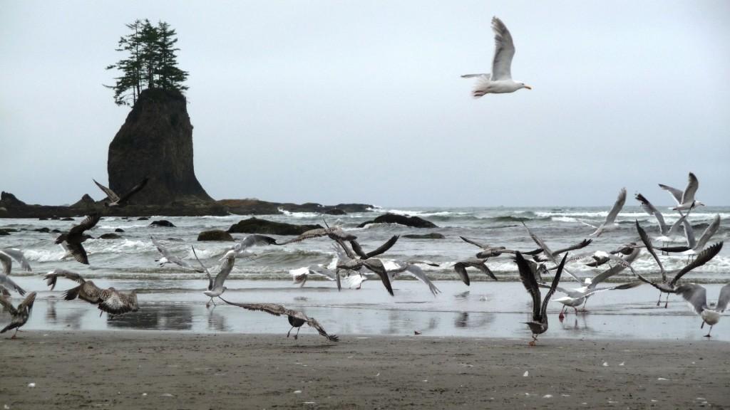 Seagulls by the beach