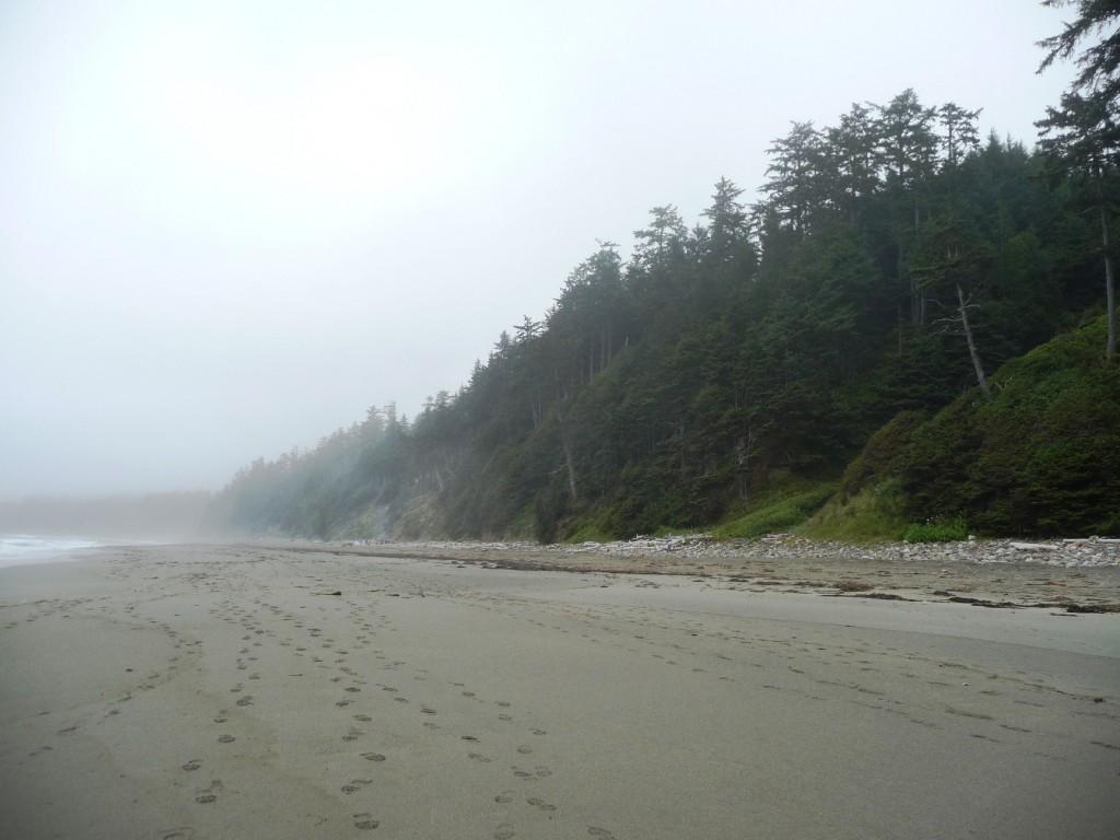 Shi Shi Beach