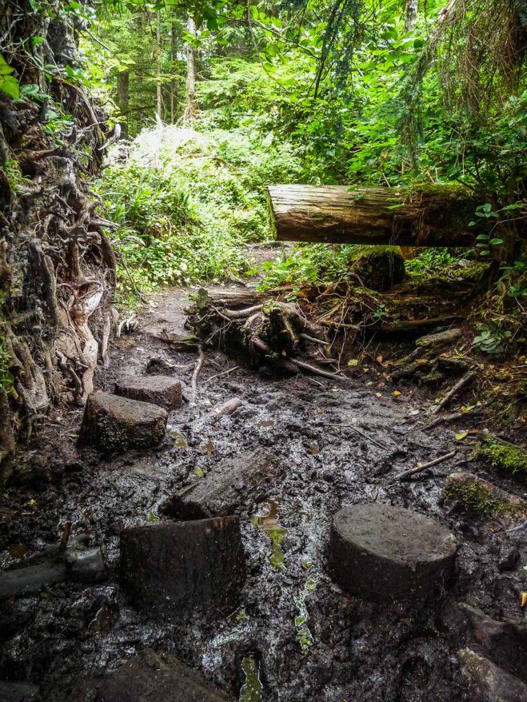 Muddy trail, West Coast Trail