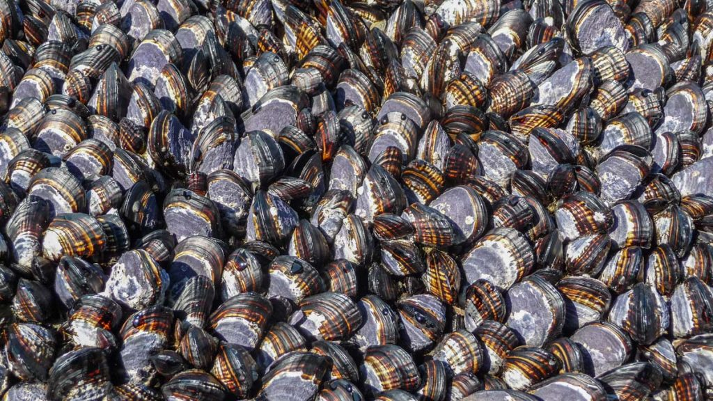Mussels, West Coast Trail
