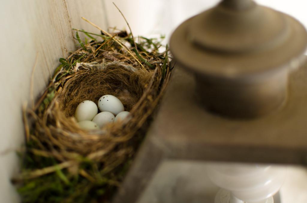 Bird's nest outside house