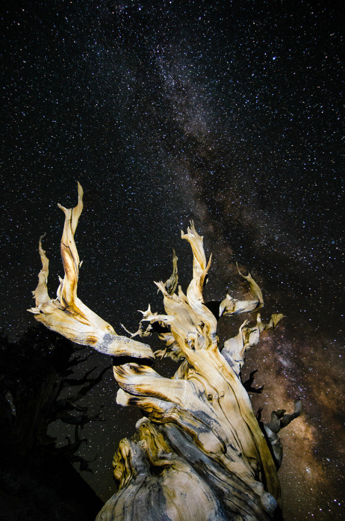 Milky Way at Ancient Bristlecone Pine Forest