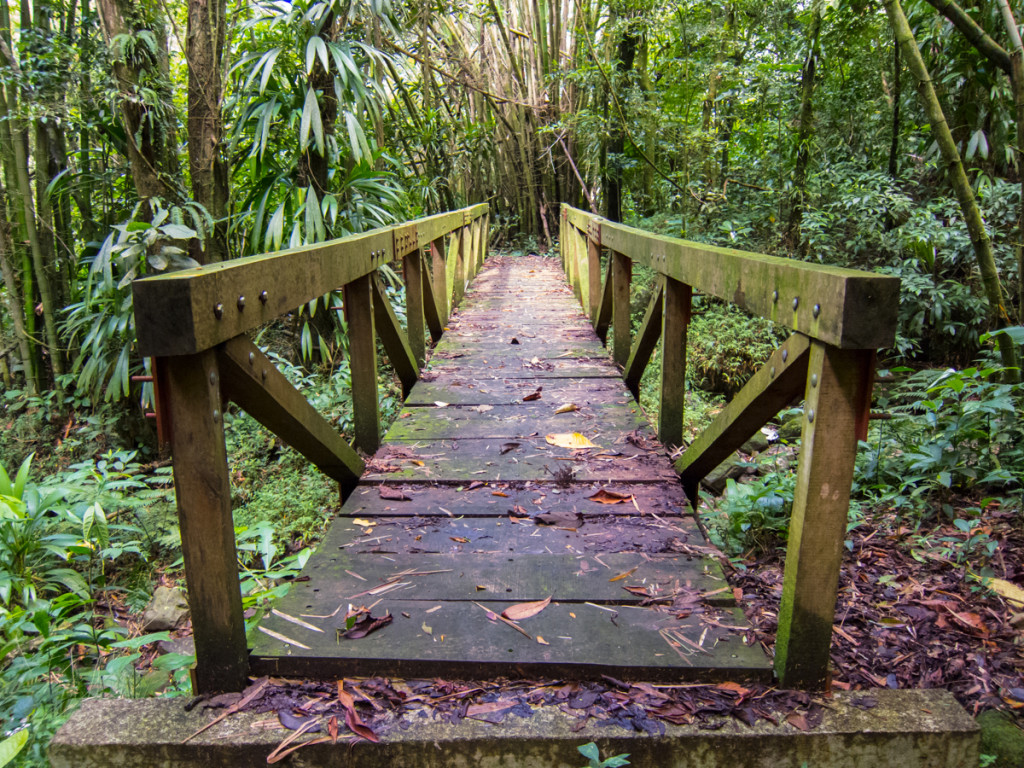 Bridge on the Waitukubuli National Trail
