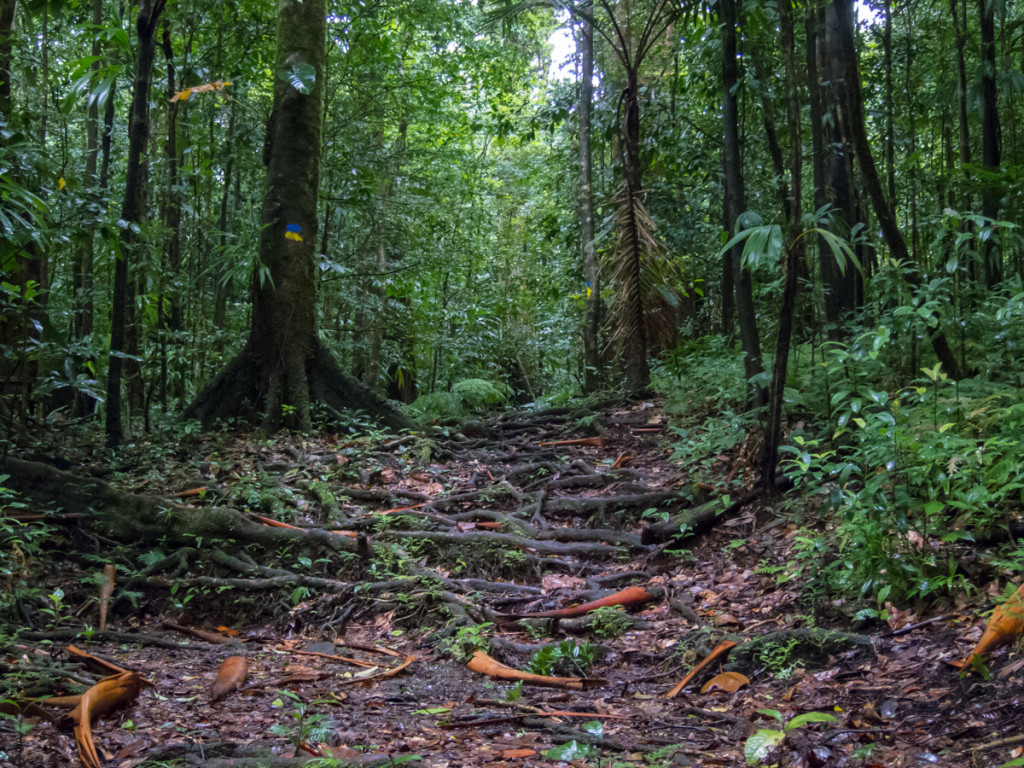 Segment 4, Waitukubuli National Trail
