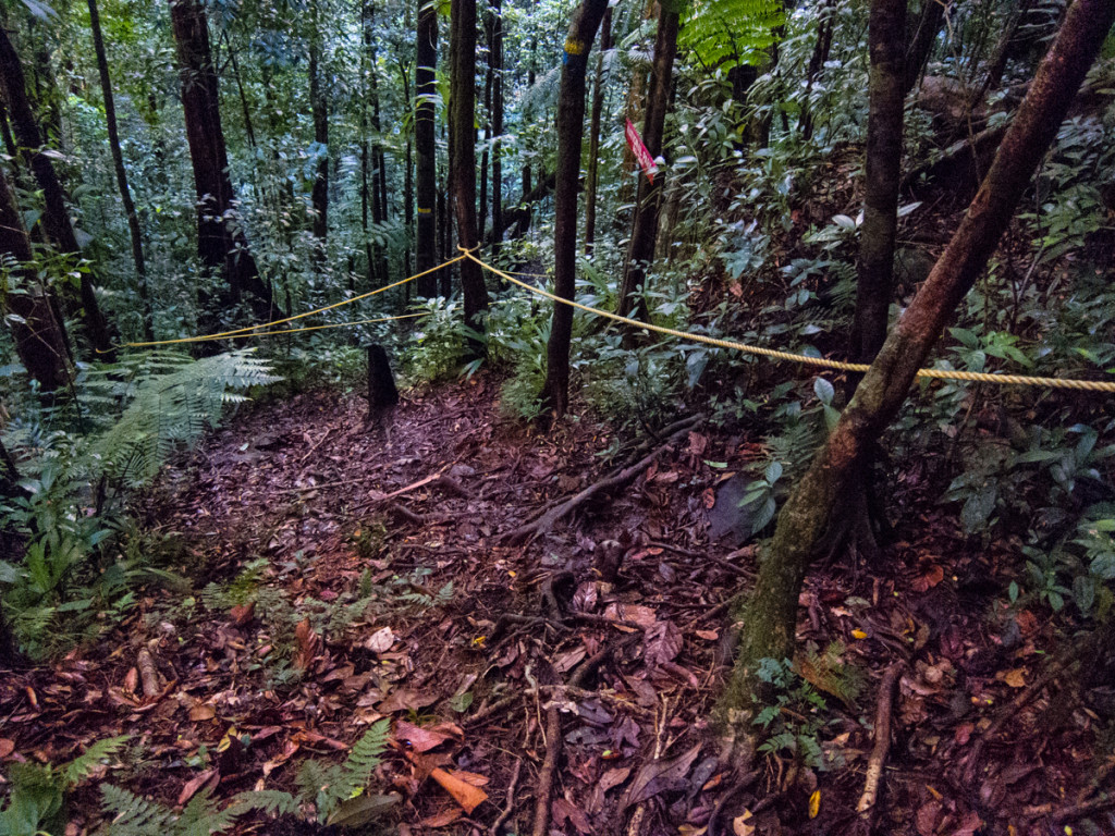 Ropes on Segment 4 of the Waitukubuli National Trail