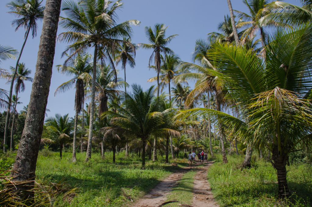 Hiking in Boipeba, Brazil