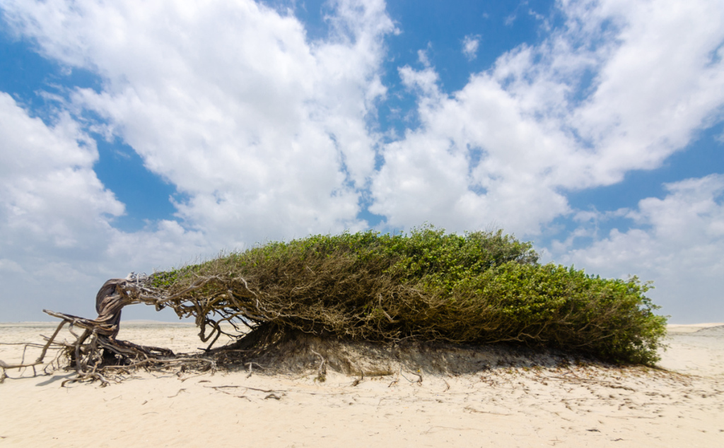 Lazy Tree, Jericoacoara