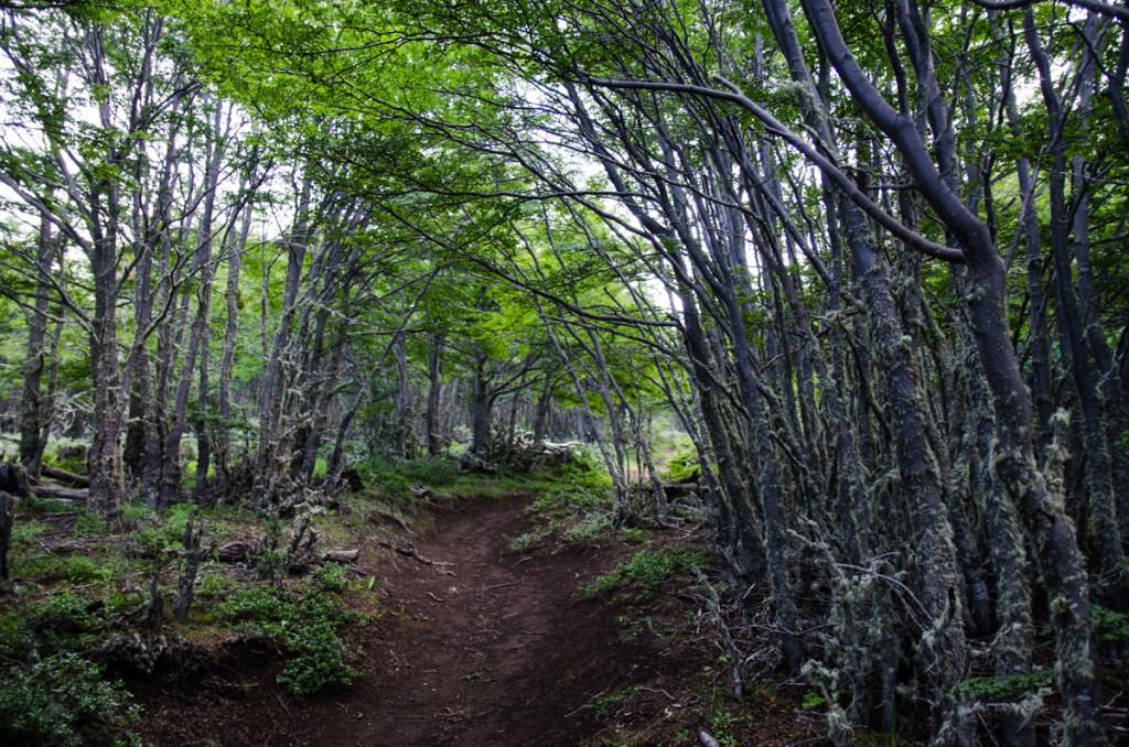 Hike to Mirador Dorotea, Puerto Natales, Chile
