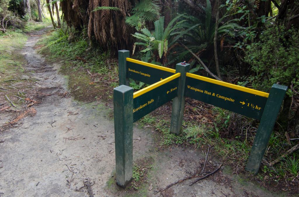 Trail to Korokoro Falls, Lake Waikaremoana Great Walk