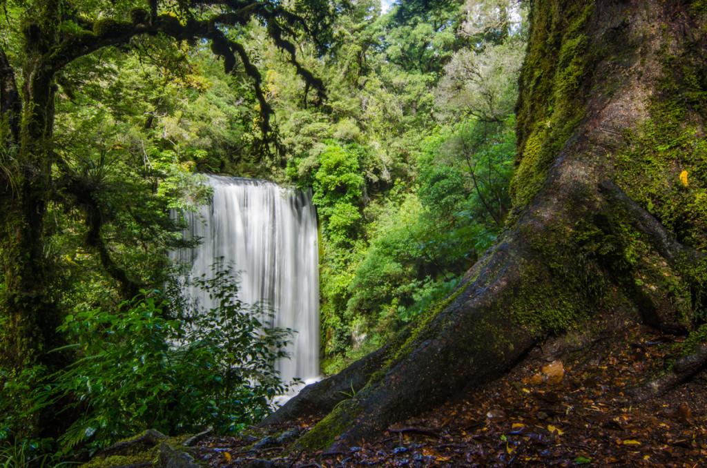Korokoro Falls, Lake Waikaremoana Great Walk