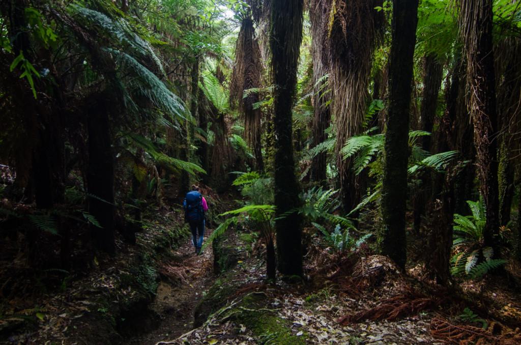 Lake Waikaremoana Great Walk