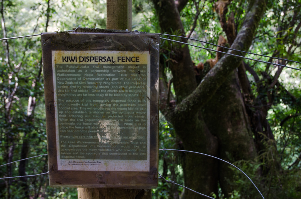 Electric fence, Lake Waikaremoana Great Walk
