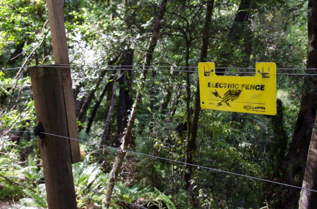 Electric fence, Lake Waikaremoana Great Walk