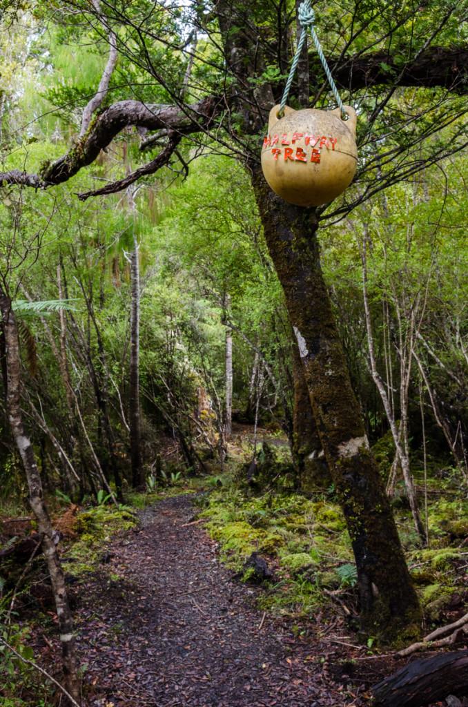 Halfway tree, Rakiura Track