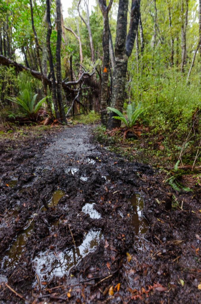 Mud on Rakiura Track