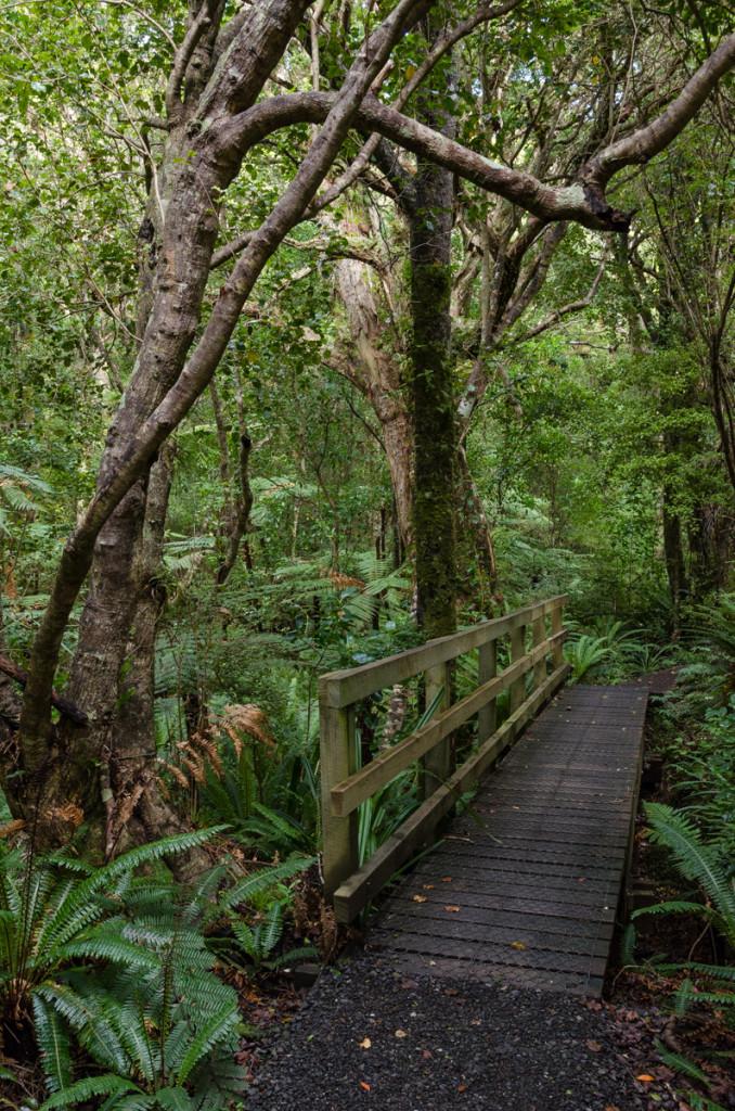 Ulva Island, New Zealand