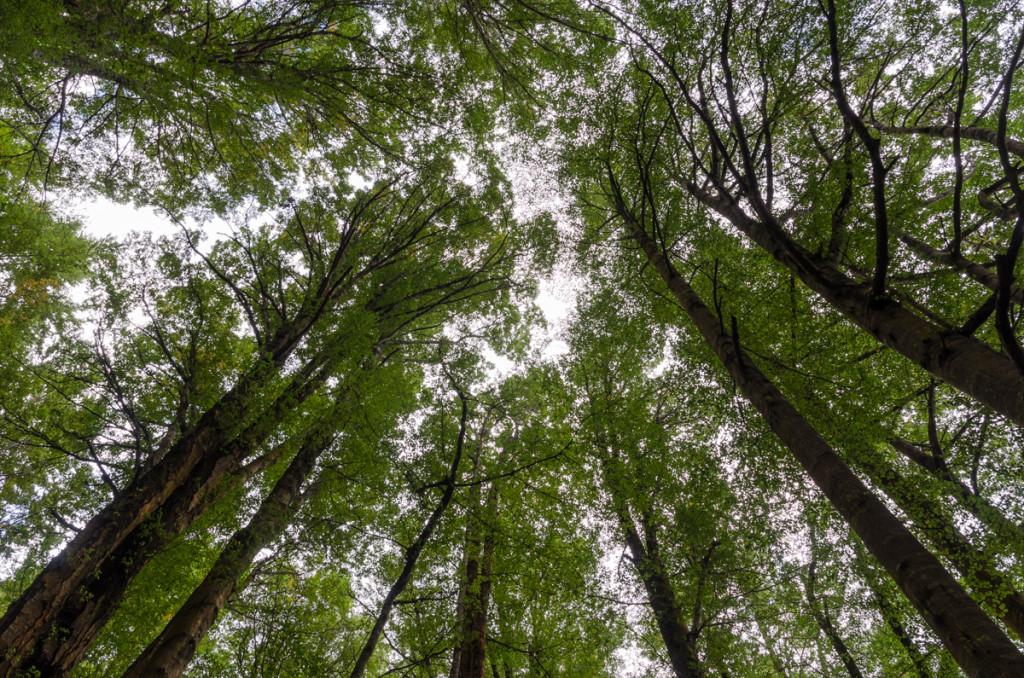 Forest, Kepler Track
