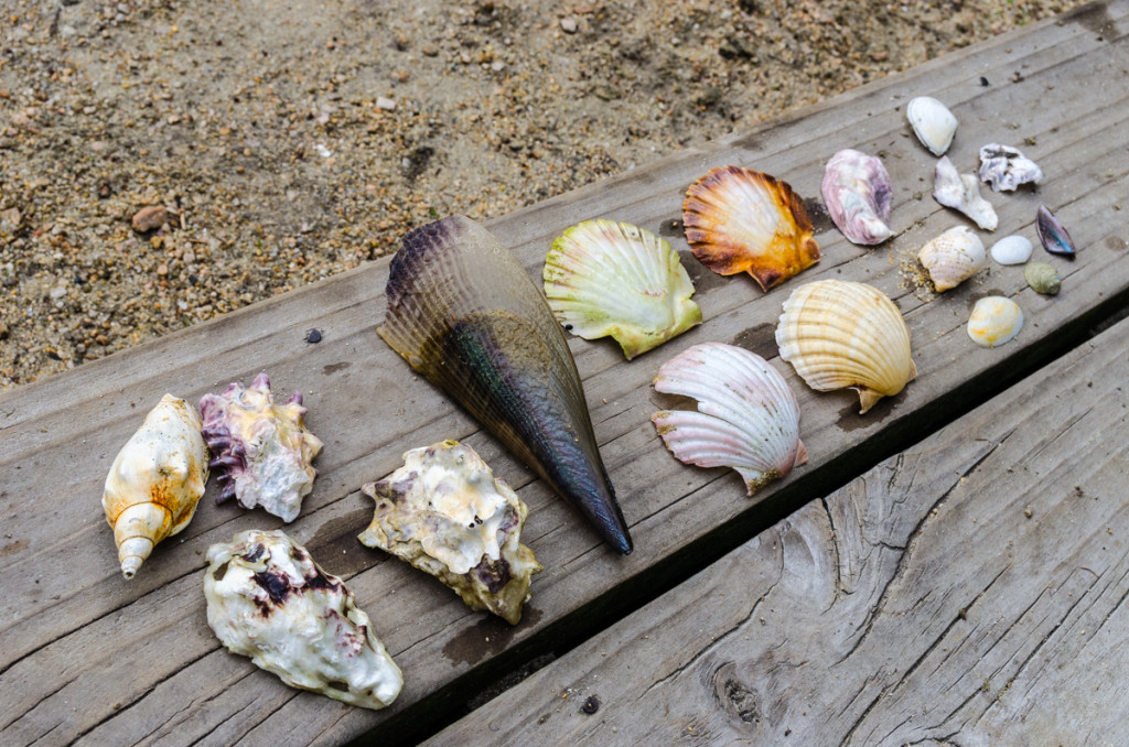 Sea shell collection, Awaroa Hut, Abel Tasman Coast Track