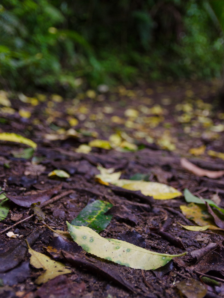 Fallen leaves, Abel Tasman Coast Track