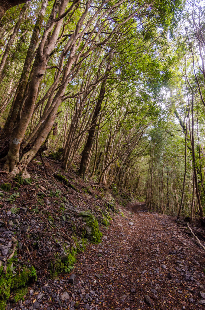 Forest, Heaphy Track