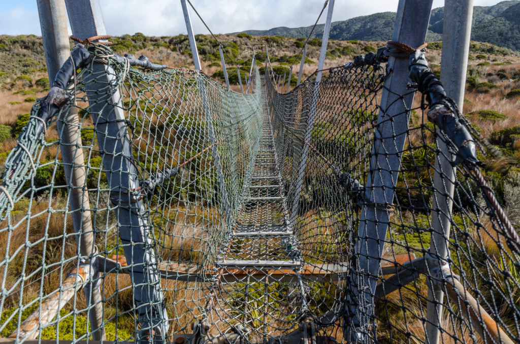Bridge on the Heaphy Track