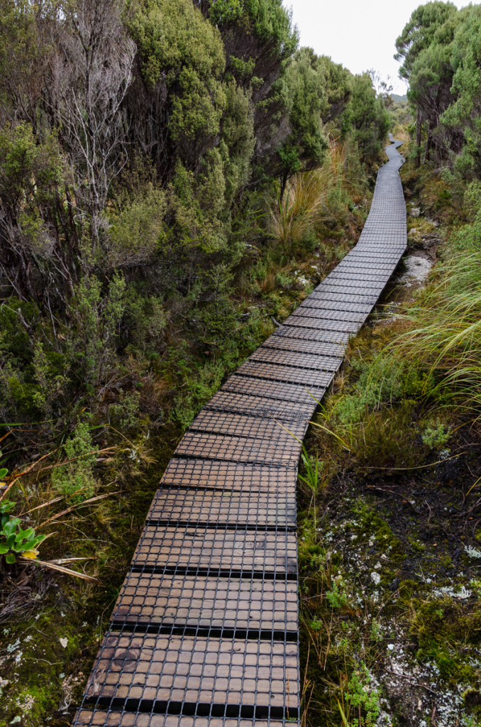 Boardwalk, Heaphy Track