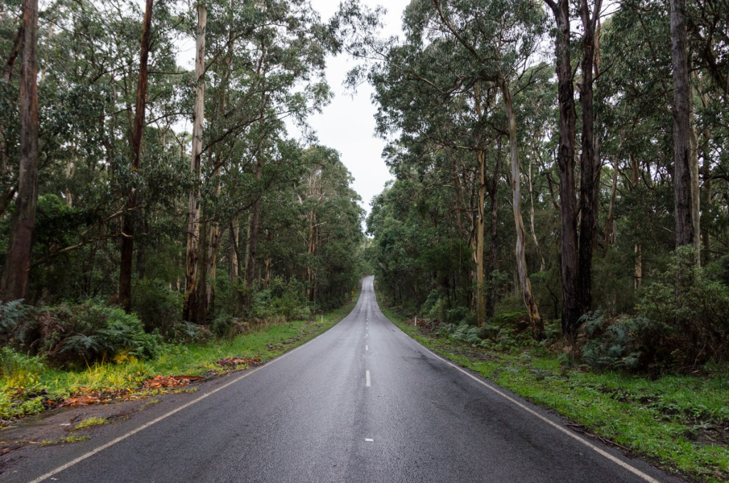 Forest, Great Ocean Road