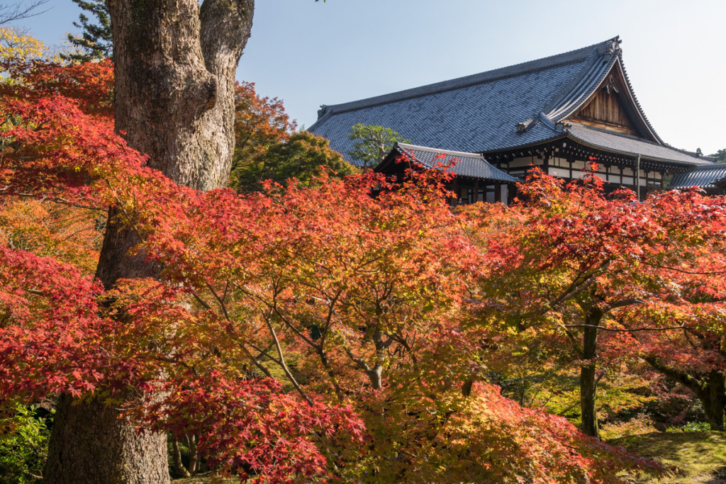 Autumn colors, Tofukuji Temple, Kyoto