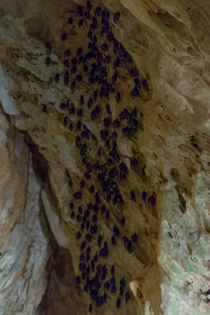 Bats inside cave, Kenting Forest Recreation Area