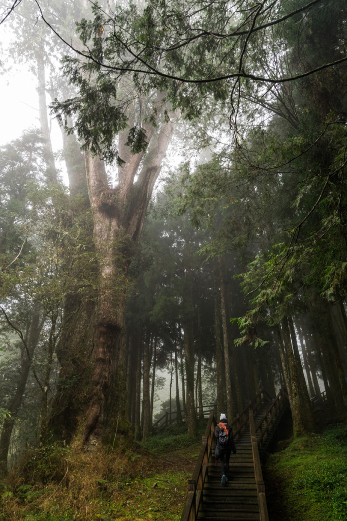 Giant Trees Boardwalk, Alishan National Forest Recreation Area