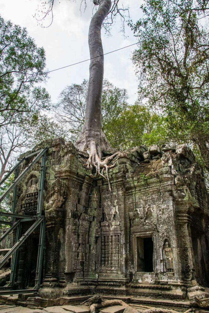 Ta Prohm temples