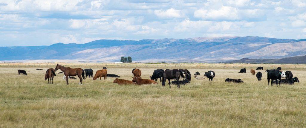 Farmland, Utah